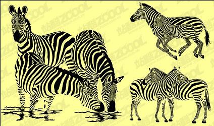 Zebra vector material Free CDR Vectors Art