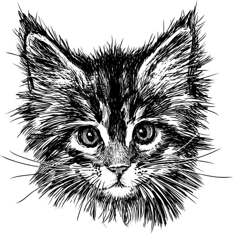 Hand Drawn Cat Free CDR Vectors Art