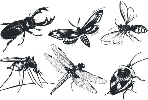 A monochrome insect Free CDR Vectors Art
