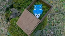 Owl Owl In Wooden Box File Download For Laser Cut Free CDR Vectors Art
