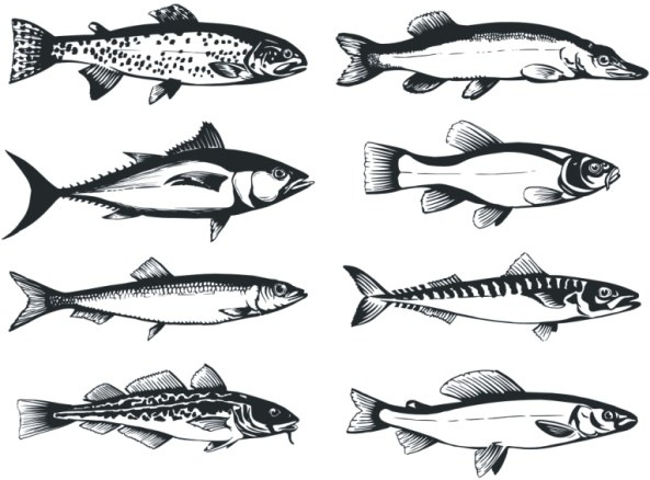 The monochrome fish Free CDR Vectors Art