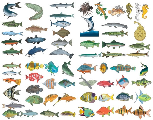 Variety of fish Free CDR Vectors Art