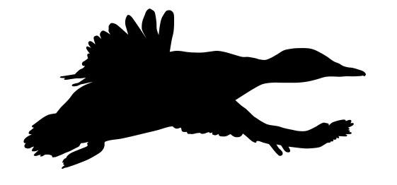 Mallard Ducks Running Free DXF File