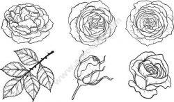 Rose Pattern Set Free DXF File