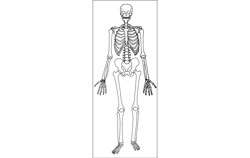 Human Skeleton Free DXF File