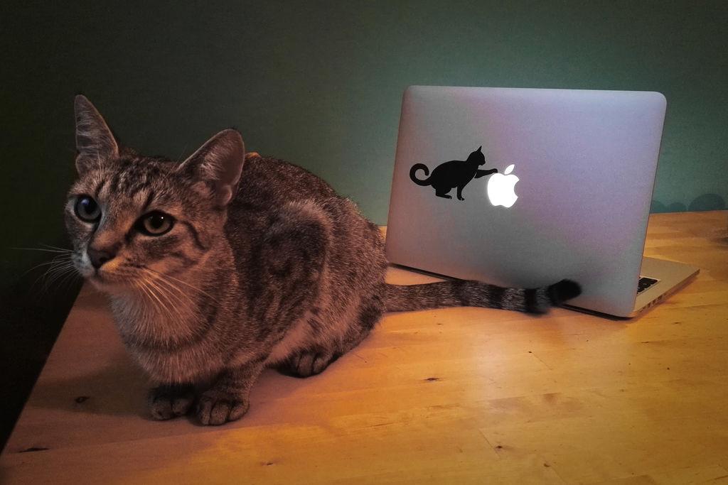 Laser Cut Laptop Sticker Cat 12x7cm Free DXF File