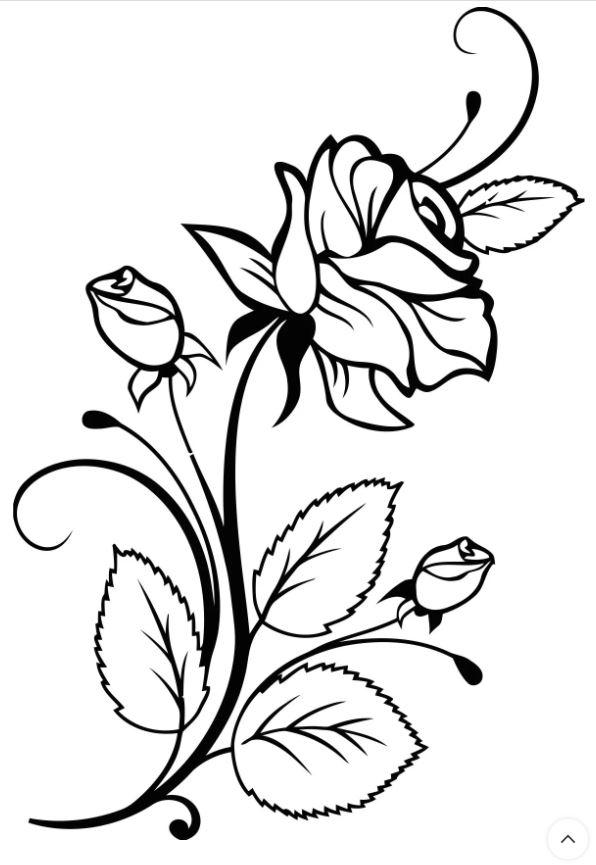 Rose Interior Design Free CDR Vectors Art