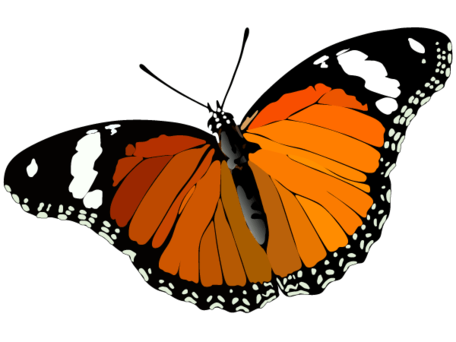 Butterfly Clip Art Free CDR Vectors Art