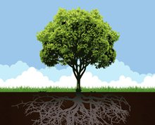 Conceptual Tree With Root And Grass Clip Art Free CDR Vectors Art