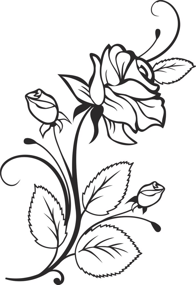 Rose Plant Design Free CDR Vectors Art