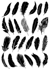 Black Feather Vector Collection Free CDR Vectors Art