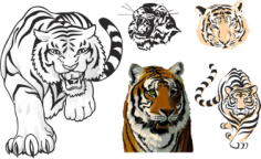 Tiger Stickers For Cars Free CDR Vectors Art