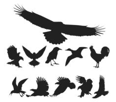 Free Vector Birds Pack Free CDR Vectors Art