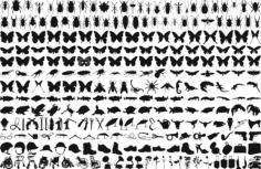 Free Butterfly Silhouette Free CDR Vectors Art