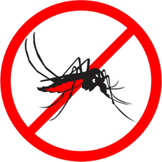 Aedes aegypti Free CDR Vectors Art
