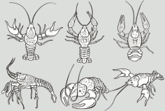 The monochrome lobster Free CDR Vectors Art