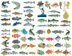 Variety of fish Free CDR Vectors Art