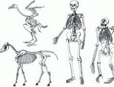 Bones skeleton Free CDR Vectors Art