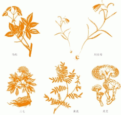 Chinese herbal medicine the angelica Free CDR Vectors Art
