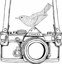 An Old Camera And A Nightingale Free CDR Vectors Art