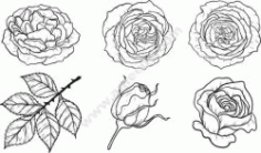 Rose Pattern Set Free CDR Vectors Art