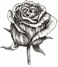 Hand Painted Rose Flower Free CDR Vectors Art