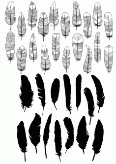 Feathers Free CDR Vectors Art