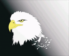 Eagle Head Free CDR Vectors Art