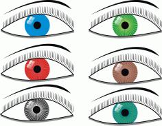 Eyes Illustration Clip Art Free CDR Vectors Art